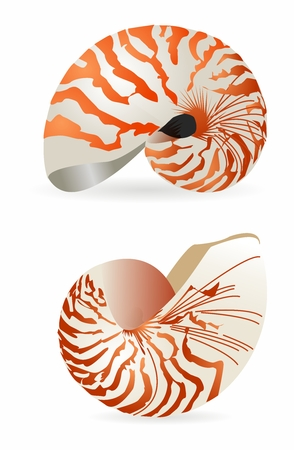 3D Realistic Nautilus Shell Rendering isolated on white background