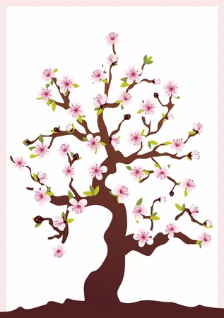 cherry tree: Vector Background of Japanese Cherry Blossom Tree Seasonal Blooming isolated