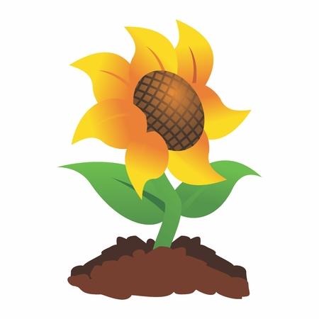 Happy Sunshine Sunflower Clipart Illustration isolated on white background. Illustration