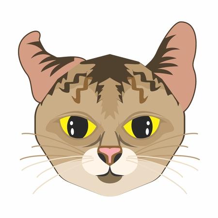 gazing: Vector Geometric Big Eyes Cat Face Mascot Illustration