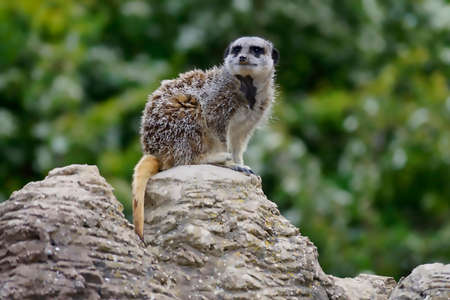 at meerkat: Meerkat