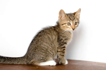 cute kitten is sitting on the floor. He plays and looks at the camera. Color mottled.