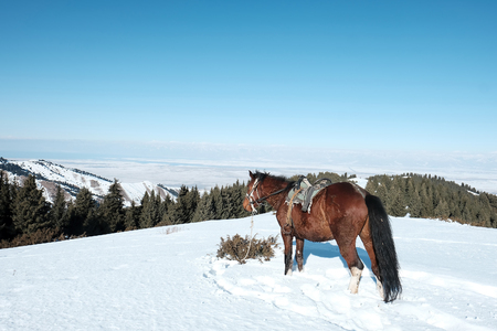 horse stands in the snow against the backdrop of mountains.