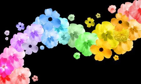 A wave of rainbow flowers are isolated on top of a black background. The are a variety of flowers in color, type and size. photo