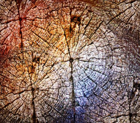 corrode: An abstract tree circle rings with texture and overlapping patterns and colors.