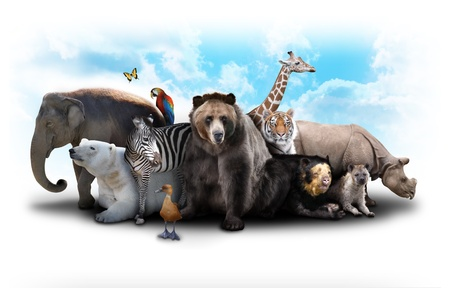 species: A group of animals are grouped together on a white background  Animals range from an elephant, zebra, bear and rhino  Use it for a zoo or friends concept
