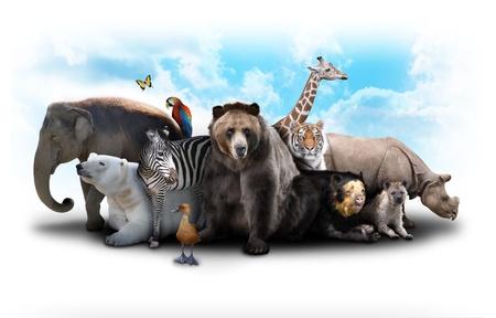 Een groep dieren zijn gegroepeerd op een witte achtergrond Dieren variëren van een olifant, zebra's, beren en neushoorns Gebruik het voor een dierentuin of vrienden begrip