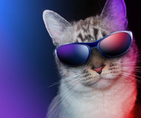 Een witte kat draagt een zonnebril op een zwarte achtergrond met feestverlichting rond de kat Stockfoto
