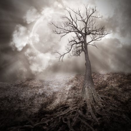 fantasy landscape: A dark tree is alone in the woods with large roots growing on an old, dry landscape against a full moon with clouds in the sky for a sad, scary or time concept
