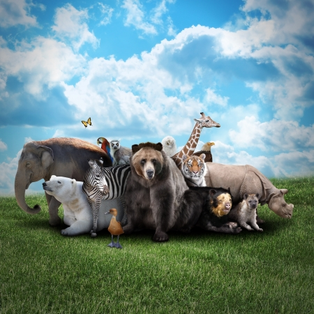 animal: A group of animals are together on a nature background with text area. Animals range from an elephant, zebra, bear and rhino.