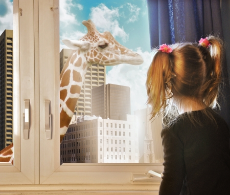 window: A little child is looking at a giraffe walking in the city through the girls window in her room for a nature or education concept