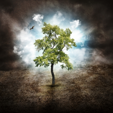 A tree is alone in the woods with on a dry landscape against clouds in the sky for a hope, dream or nature concept  photo