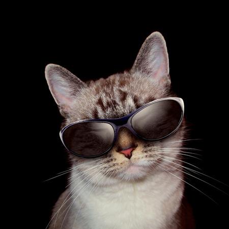 흰 고양이는 고양이의 주위에 파티 조명과 함께 검은 배경에 선글라스를 착용 스톡 콘텐츠 - 25827886