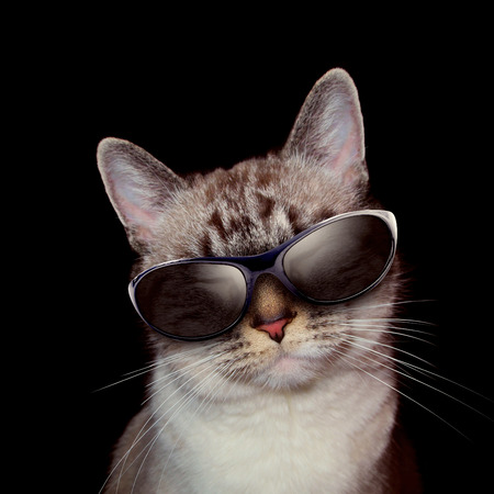 A white cat is wearing sunglasses on a black background with party lights around the feline