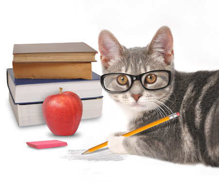A gray cat is holding a pencil with a scribble and books on a white isolated background for a training or humor concept. Stock Photo