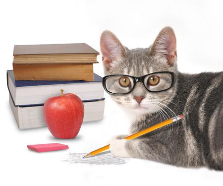 Un gato gris es la celebración de un lápiz con un garabato y libros sobre un fondo blanco para un concepto de formación o de humor. Foto de archivo