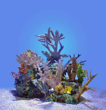 A blue underwater coral reef with gravel and bright colors isolated for a marine or sea concept. photo