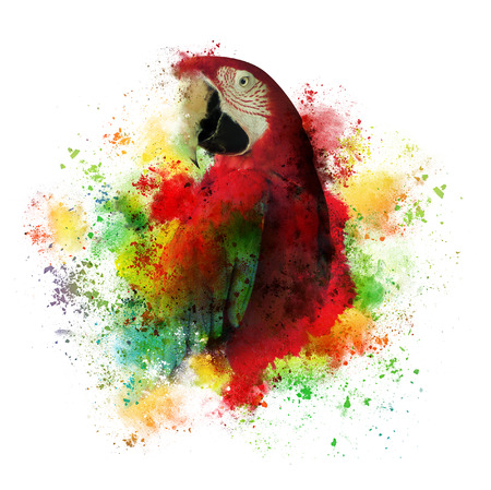 A creative art work of a tropical macaw parrot bird. The brushstrokes are messy on a white isolated background.