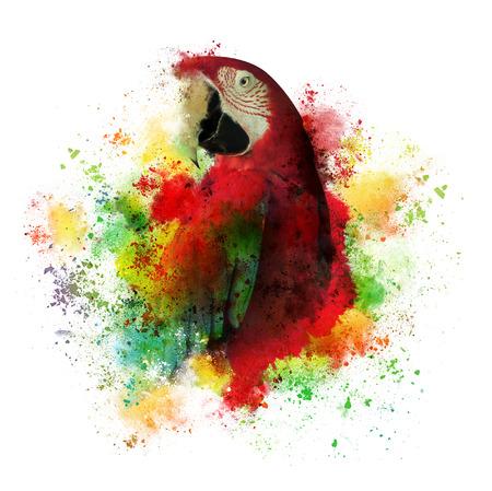 熱帯コンゴウインコのオウム鳥の創造的な芸術作品。筆は分離の白地に乱雑です。