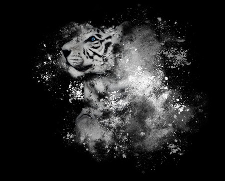 A white tiger with blue eyes is isolated on a black background with artistic paint splatters around for a creativity or art concept.
