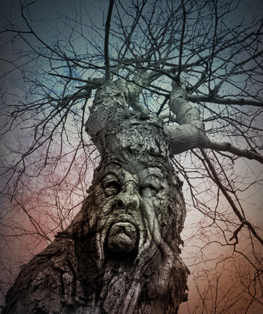An old lonley tree has an angry face in the bark with lots of tree branches on top for a winter, halloween or fear concept.