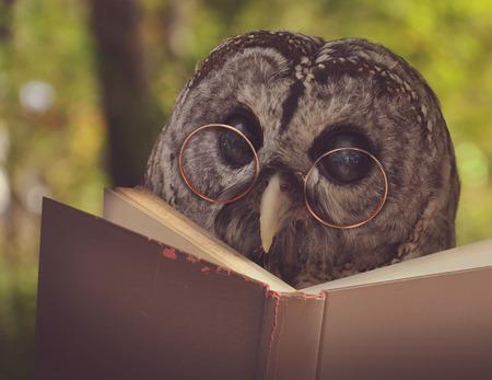 Een uil dier met een bril is het lezen van een boek in het bos voor een eduication of school concept. Stockfoto