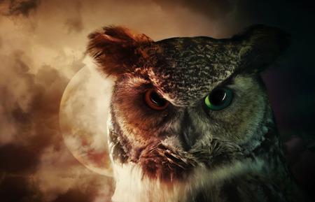 무서운 야생 올빼미의 초상화는 두려움이나 신비 개념 백그라운드에서 달과 밤 하늘 아래를 내려다 보면서.