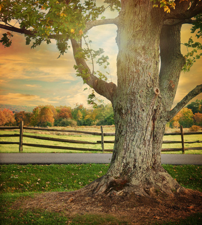 A large tree with changing colorful fall leaves is in a landscape with a wooden fence in the background for a season or nature scene. Фото со стока