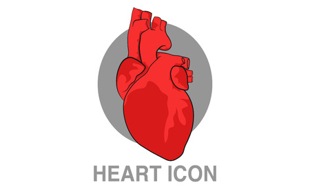 Realistic human heart icon. Clip-art vector illustration.