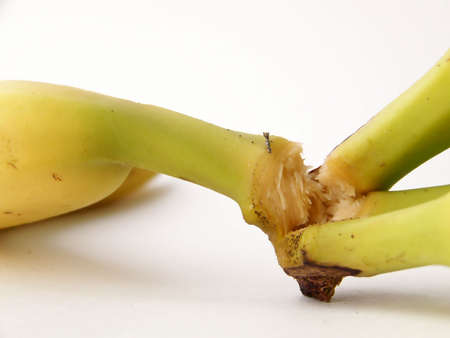 separating: Detail image of banana stems, while one is being separated from the bunch.  Horizontal orientation. Stock Photo