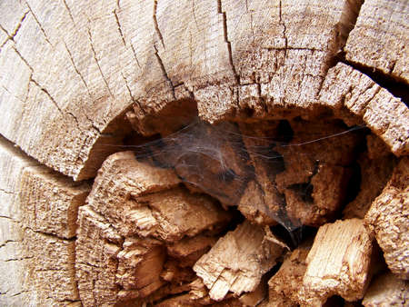 Image of a cobweb in the the center of an old log. Imagens