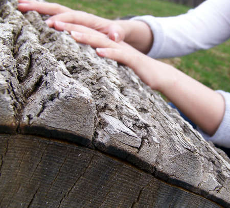 Detail of the bark of an old log with hands visible in background. Stock fotó