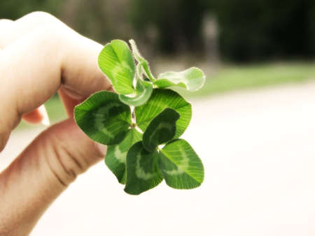 Image of a hand holding a bunch of bright green clover, with a curved line of grass in background.  Soft focus and horizontal orientation. photo