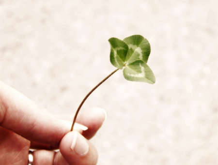 Image of a single piece of bright green clover, being held by a hand.  Soft focus and horizontal orientation. photo