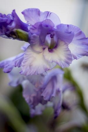 Purple flower Imagens