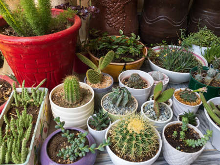 Different type of succulents and cactus collection