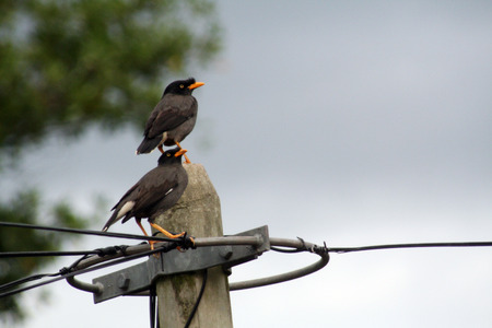 Two birds hanging out on a telephone pole, subject is focused while background is blurred to give stronger impression.