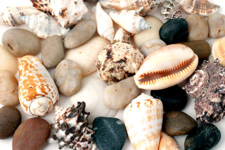 Background from various sea cockleshells and round pebbles photo