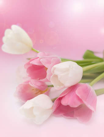 pink tulips: Bouquet from spring tulips on a pink background Stock Photo