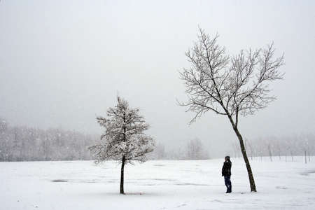 dreary: Bare trees: a makeshift shelter during a snowstorm