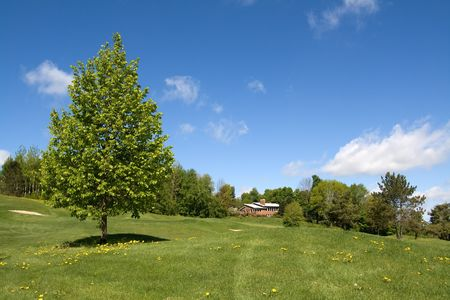 Aspen tree in a field on a spring sunny day Stock Photo