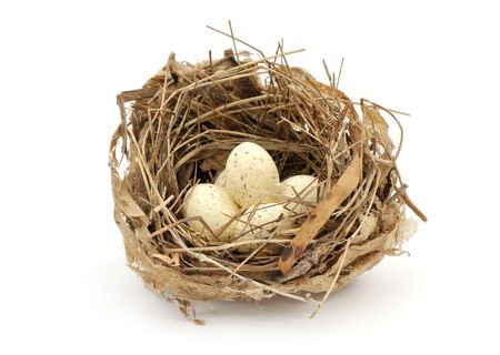 Small bird nest with eggs on white background