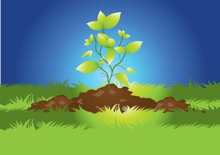 seedlings Stock Vector - 6015000