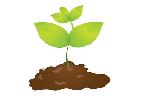 seedlings 1 Stock Vector - 6029545