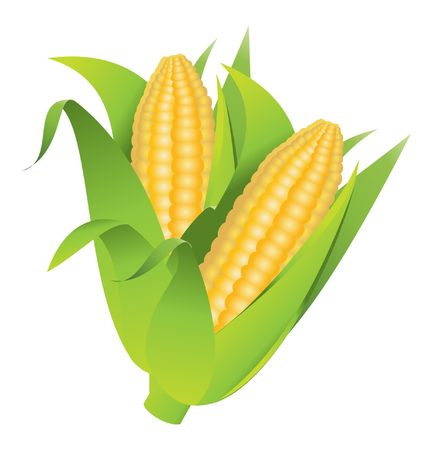 corncob Illustration