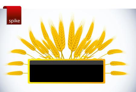 clip art wheat: spike