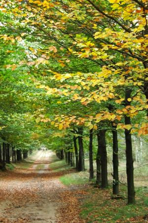 Dirtroad in autumn Stock Photo - 8142826