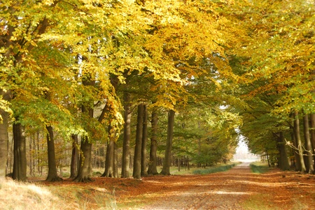 Dirtroad in autumn photo