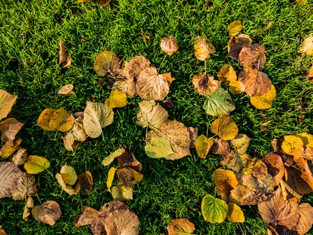 green brown: Fall leaves background green, brown on grass
