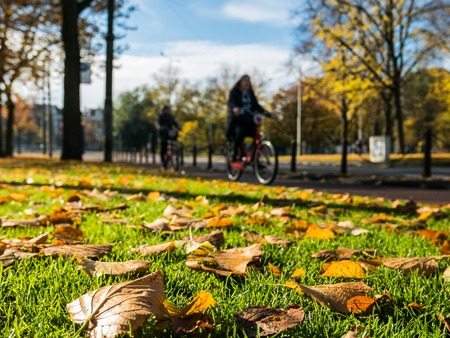 Fall leaves background green, brown on grass and bikes passing Stock Photo